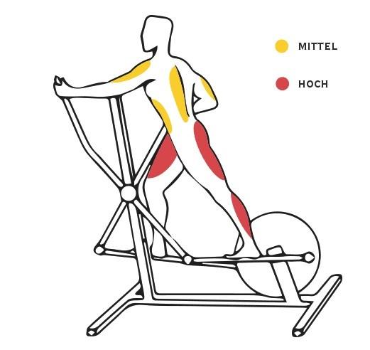 Training auf dem Crosstrainer beansprucht eine Reihe von Muskeln.