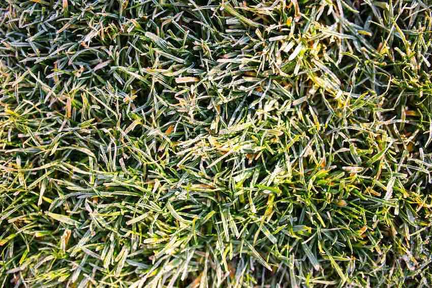 Auf gefrorenem Boden sollten Sie nicht vertikutieren, sie beschädigen damit sowohl den Vertikutierer, als auch die vorhandenen Graswurzeln.